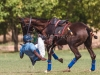 Access Bank UNICEF Polo Tournament 2012 - Low Goal