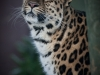 big_cats_1_of_1_14