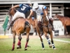 2012-mtn-lagos-international-polo-tournament-low-goal-week-38
